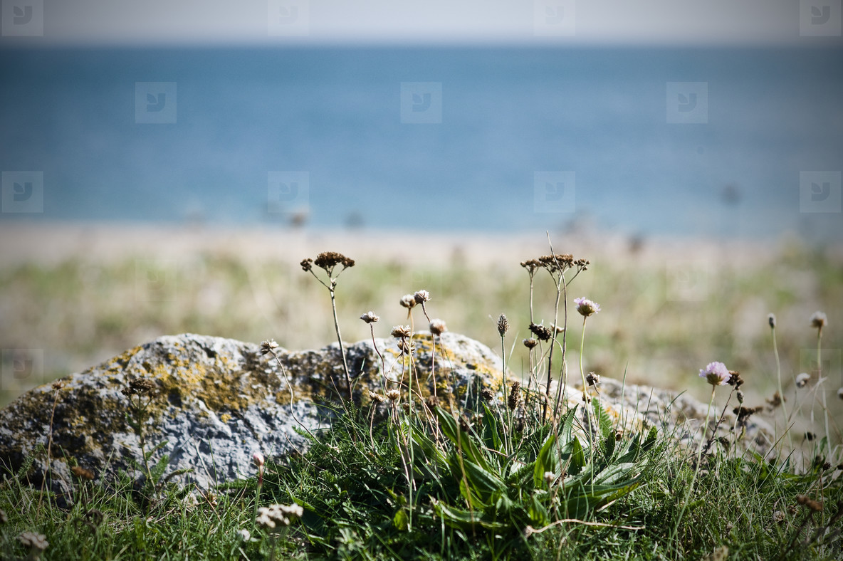 wild flowers on the beach