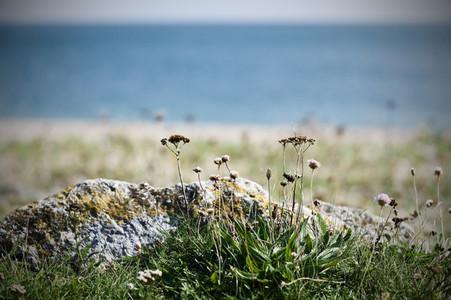 wild flowers on the beach