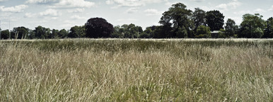 bushy park surrey