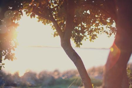 Tree 2