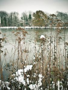 snow on riverbank