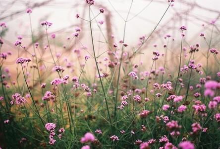 Talking Flower
