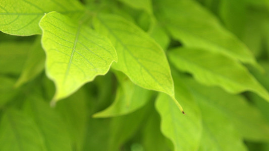 Green Leaves 03
