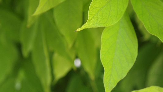 Green Leaves 02