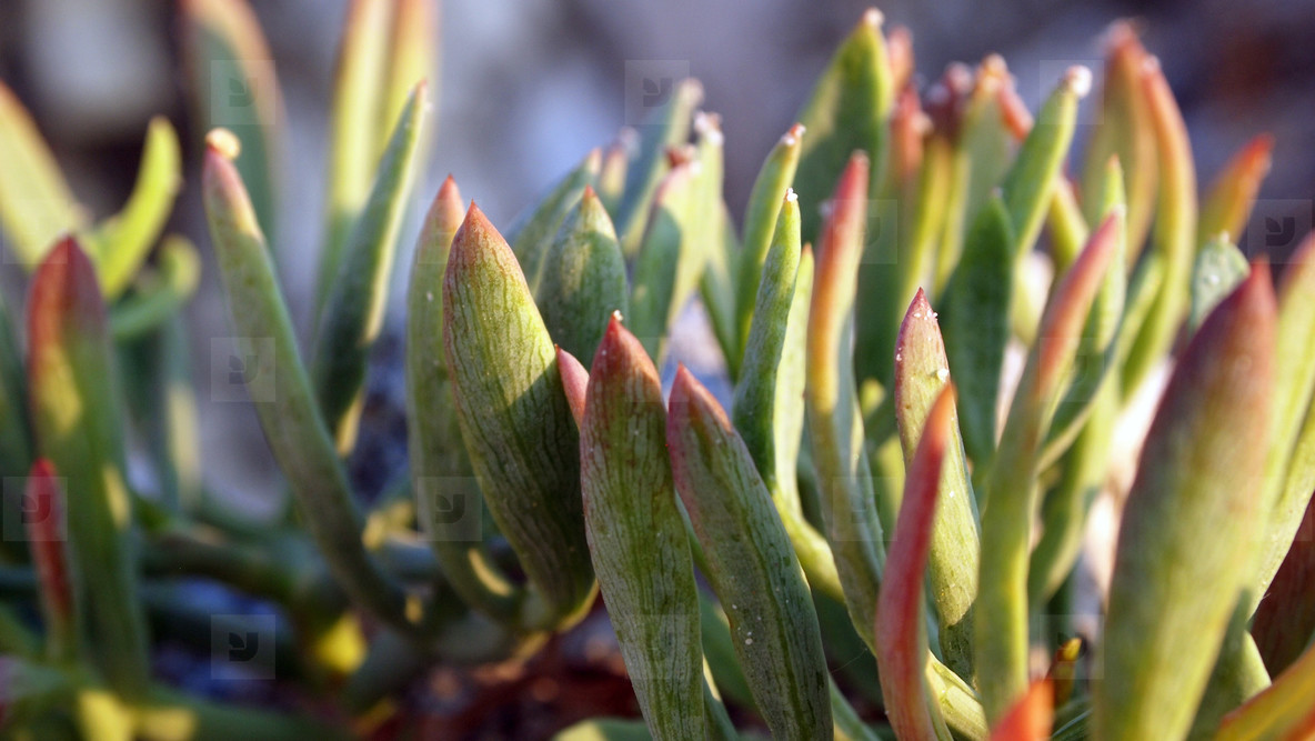 Plant Close up 03