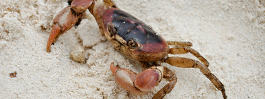 Crabby McCraberson