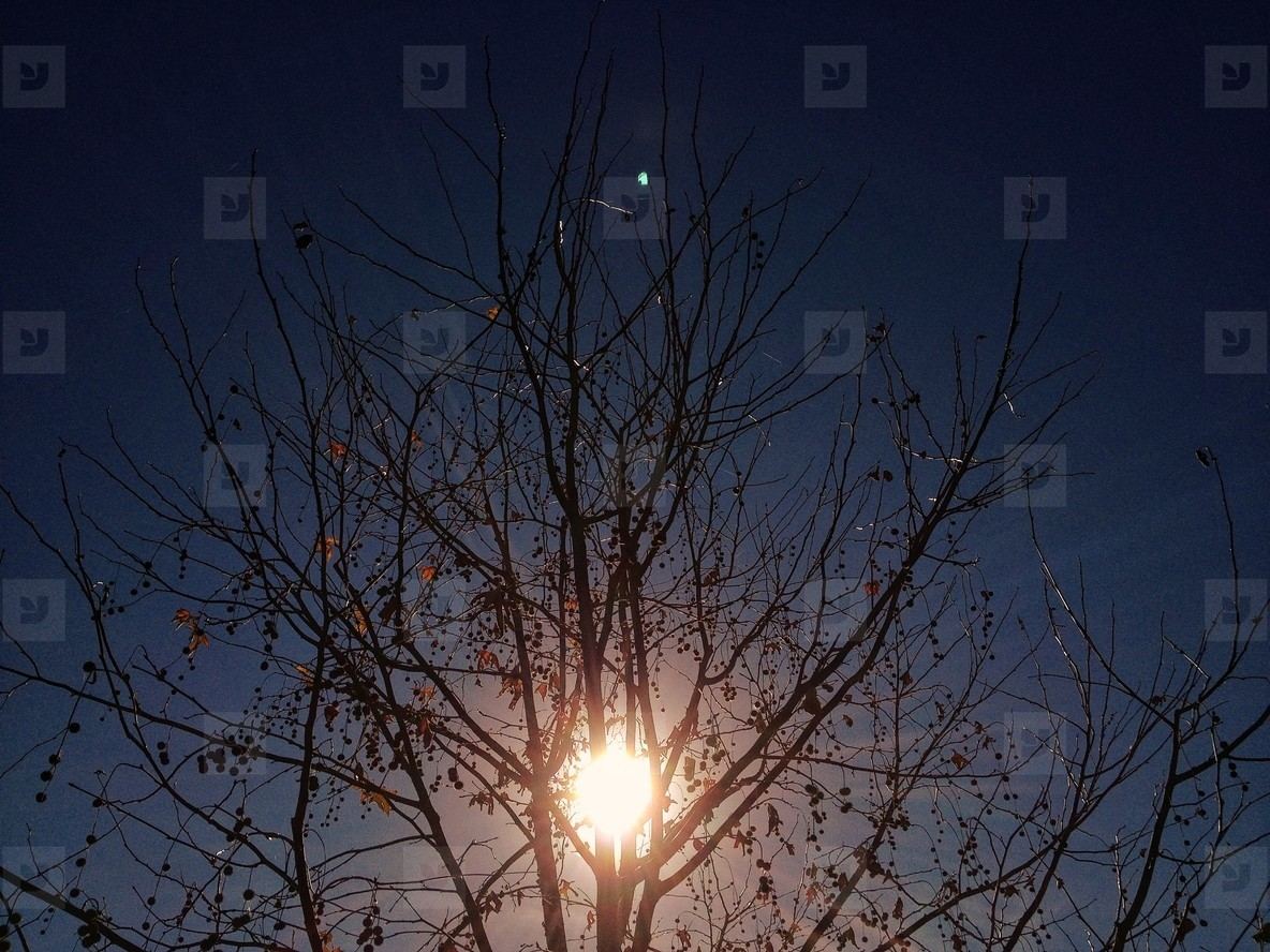 Backlit Tree