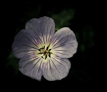 Botanical 006