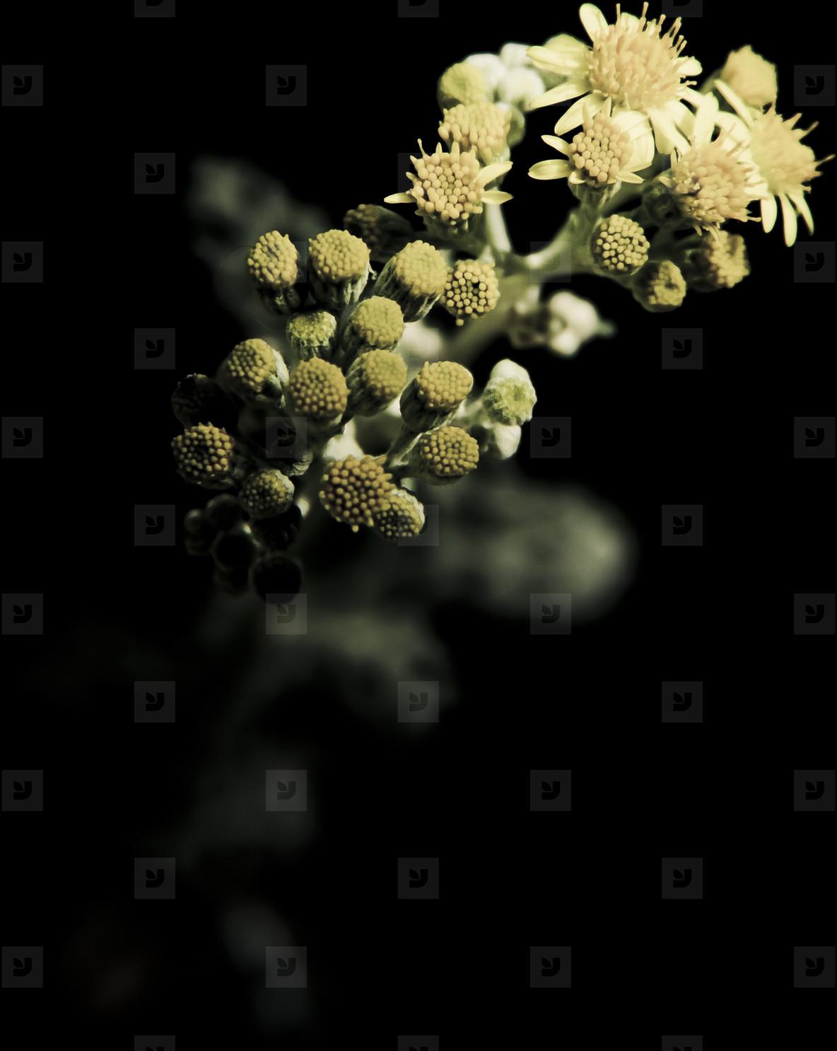 Botanical 007