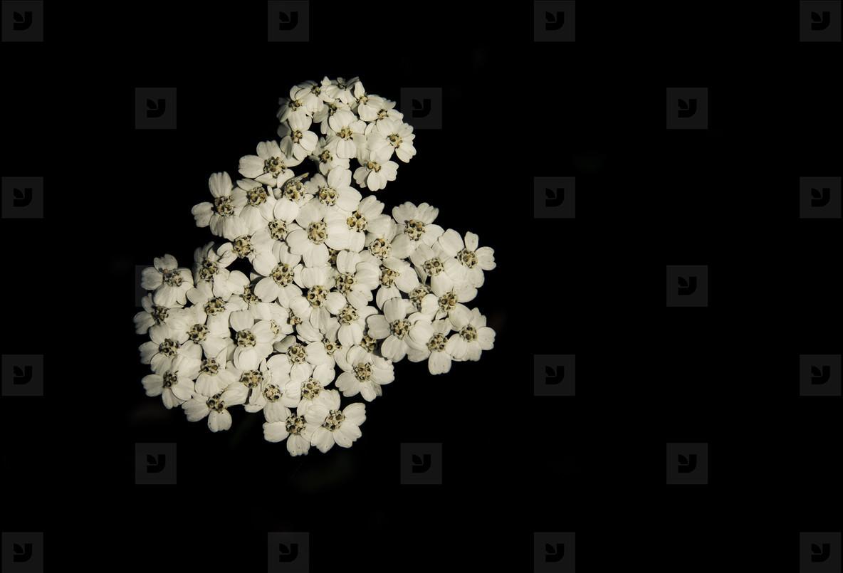 Botanical 008