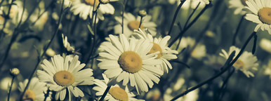 Botanical 009