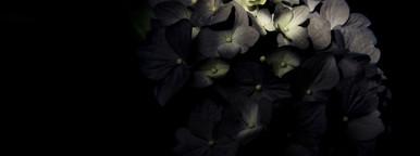 Botanical 010
