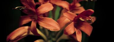 Botanical 011