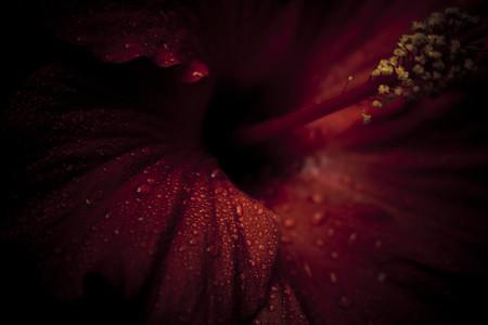 Botanical 012