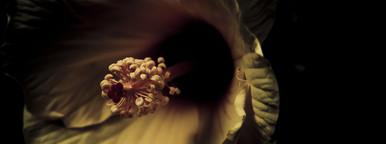 Botanical 014