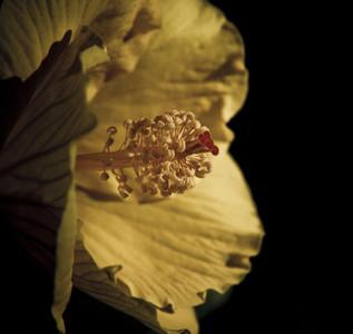 Botanical 015