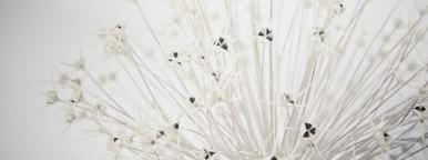 Botanical 016