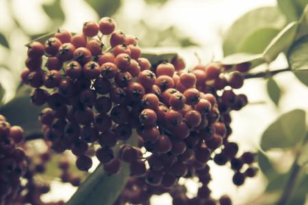 Botanical 018