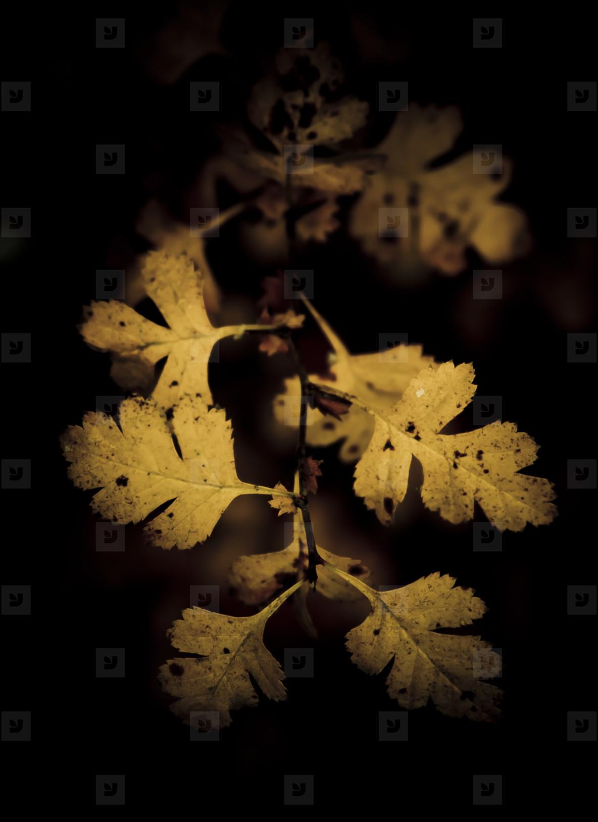 Botanical 019