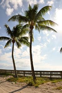 2 Palm Trees