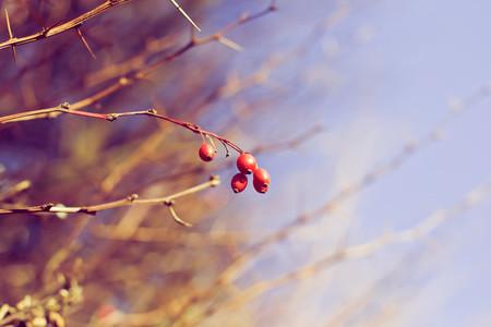 Botanical 021