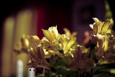 Botanical 023