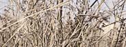 Autumn Grass