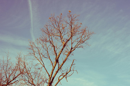 Winter Trees 1