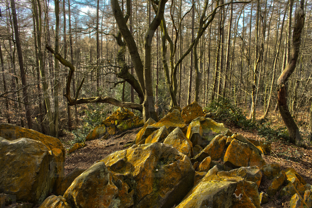 Outwoods 002