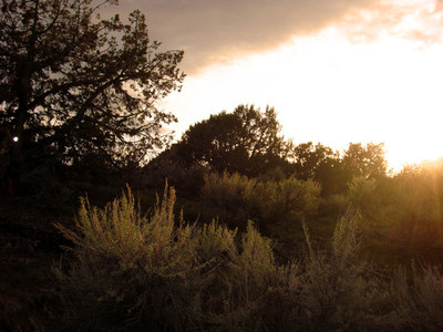 sagebrush at sunset