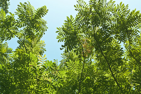 Green leaves against a bright bl