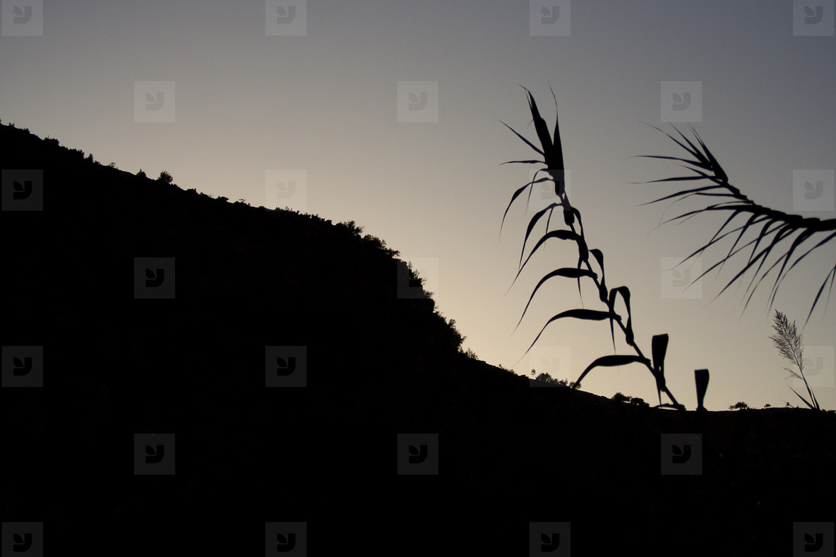 Silhouette Hill