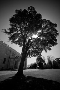 sunlight through a tree