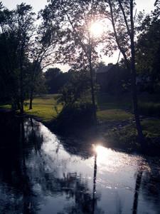 River Weeds 2