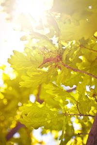 Tree Sunshine summer