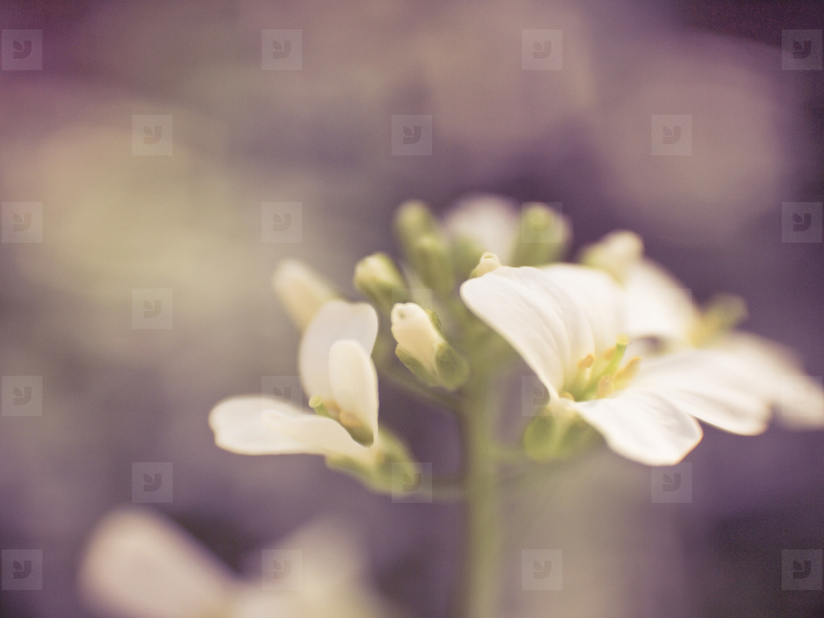 macro flower 2