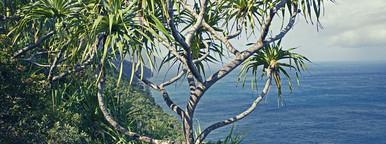 Na Pali Coast Trail  Kauai
