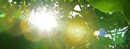 Tropical jungle plants