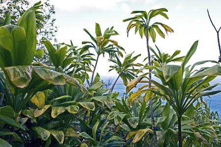 Tropical island plants