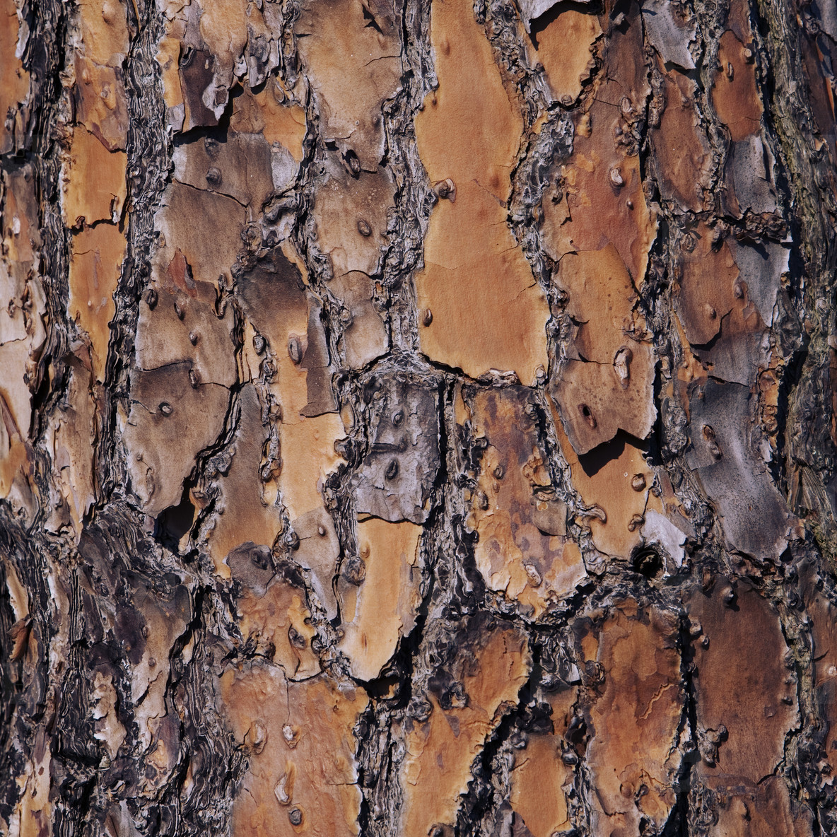 Tree bark close up