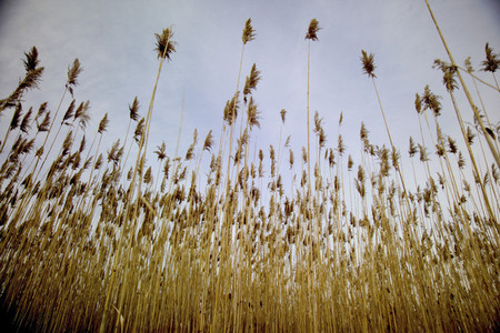 Tall grasses looking upward