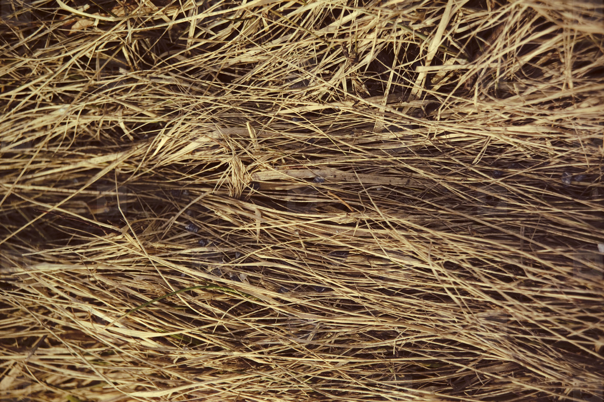 Dry matted grass
