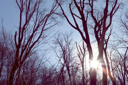 Sunshine through trees