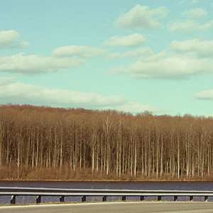 Tree line and road