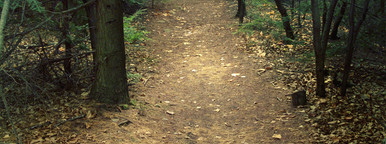 Nature trail through pine trees