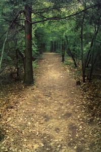 Nature trail through pine trees