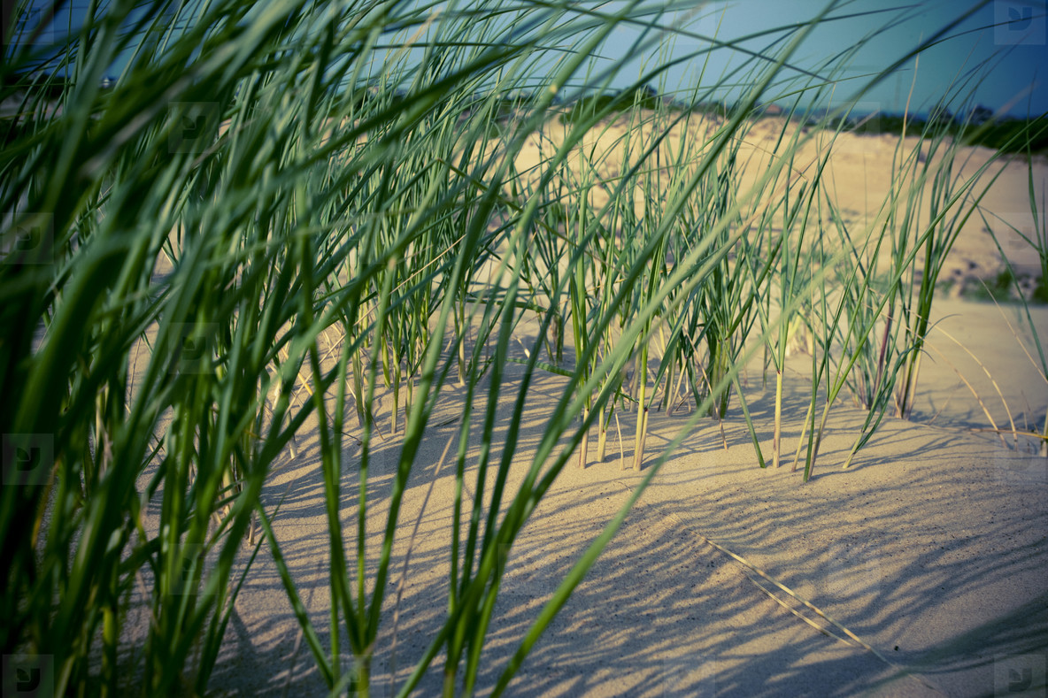 Grass in the sand