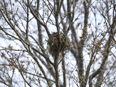Bird 039s Nest