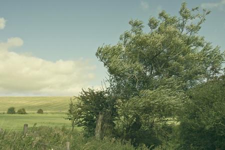 Tree Breeze