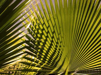 Palm Texture
